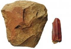 Находки со стоянок: каменные топор, нуклеус.
